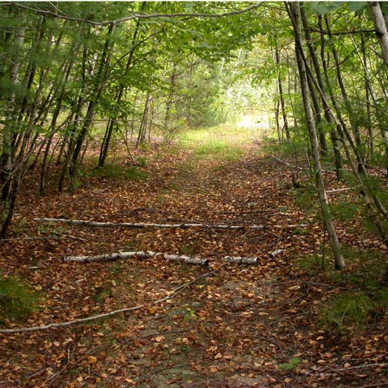 Walden Woods Concord, Ma